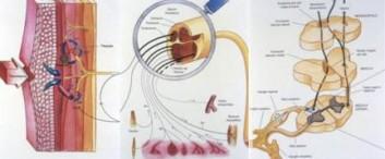 Manejo del dolor – Dr. Juan Carlos Galiotti Curso de Manejo del Dolor para Médicos Generalistas – Terapia del dolor Medico Especialista en Anestesiología Subjefe […]
